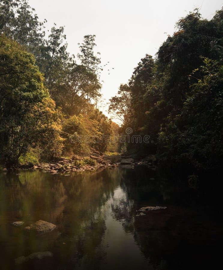 Взгляд реки леса стоковое фото rf