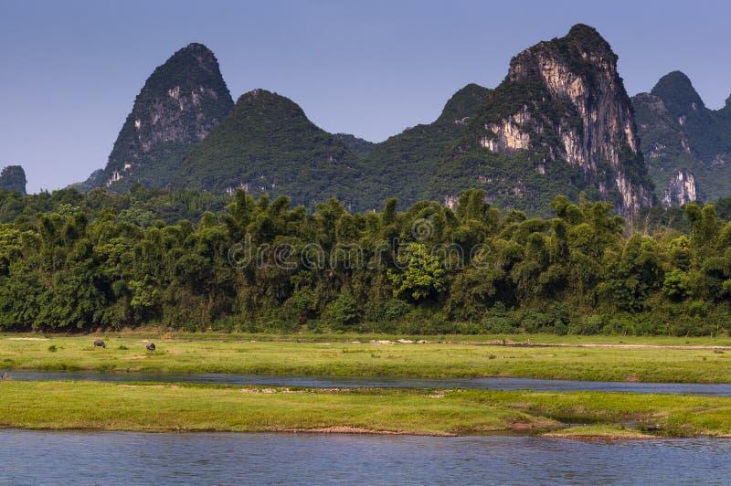 Взгляд реки Li с индийским буйволом и высокорослым известняком выступает на заднем плане около Yangshuo в Китае стоковые фотографии rf