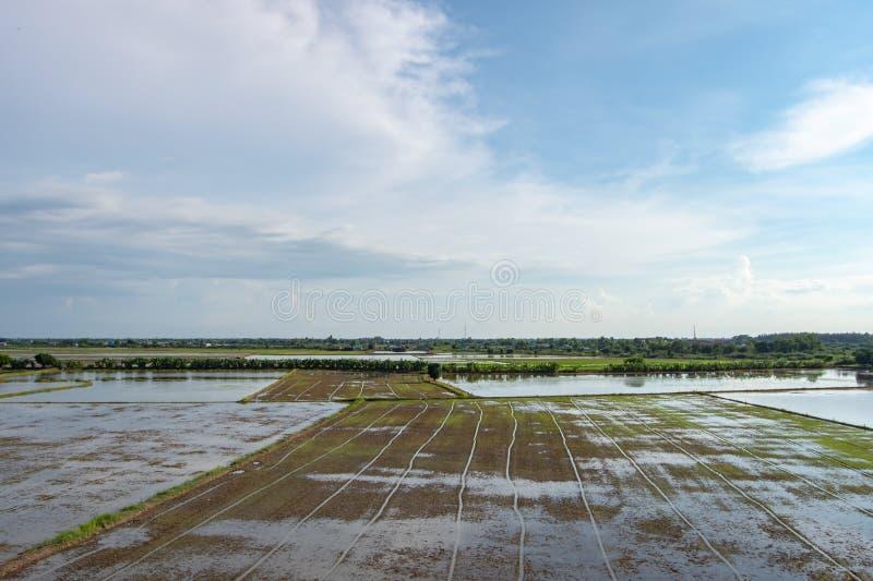 Взгляд рисовых полей с подготовкой почвы, засаживая рис стоковые фото