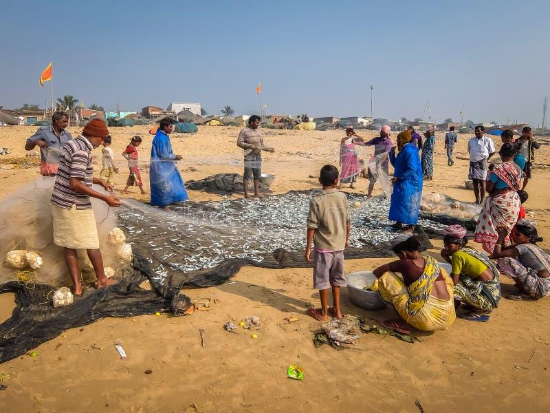 Взгляд рыболовов с сетями полными рыб на пляже в Puri стоковые фото