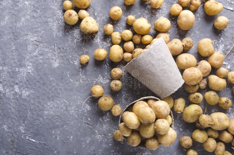 Взгляд сверху баков торфа, свежих картошек на серой поверхности : Больший сбор весны стоковые изображения rf