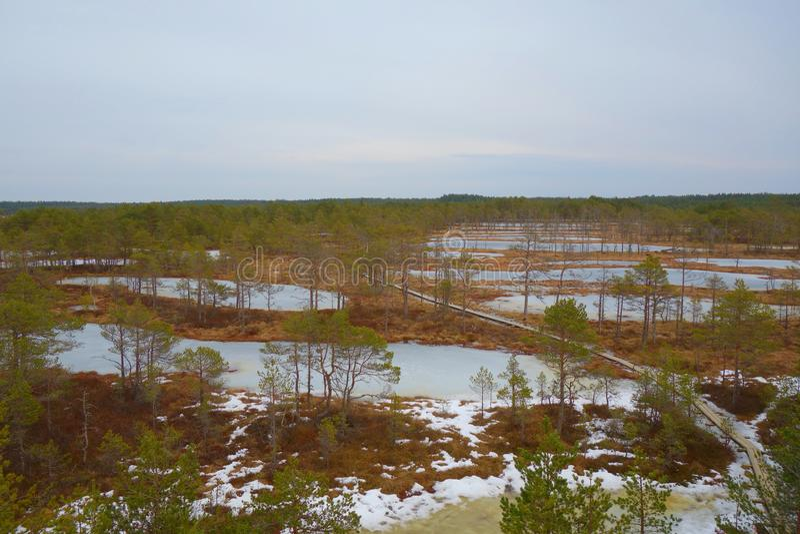Взгляд сверху болота в Эстонии Поднятые озера трясины в предыдущих веснах viru тропки природы трясины Променад трясины популярное стоковое фото