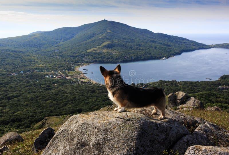 Взгляд сверху деревни, гор и моря через глаза собаки, stasis на камне на горе стоковое изображение rf