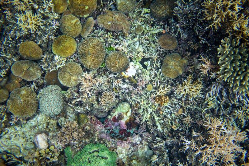 Взгляд сверху дна моря с кораллами и морскими животными Предпосылка фото взгляда сверху сброса кораллового рифа Разнообразная тек стоковая фотография rf