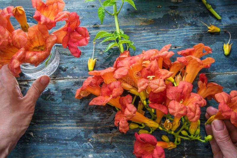 Взгляд сверху женщины вручает аранжировать цветки в стеклянном опарнике на деревянной деревенской таблице стоковая фотография