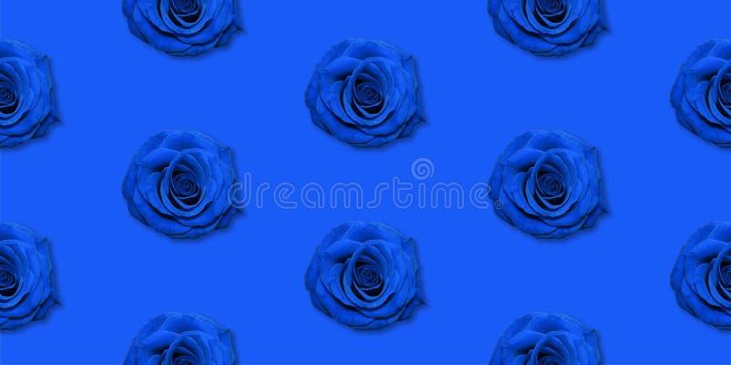 Взгляд сверху картины цветков Роза, плоское положение Цветочный узор на яркой предпосылке стоковые фото
