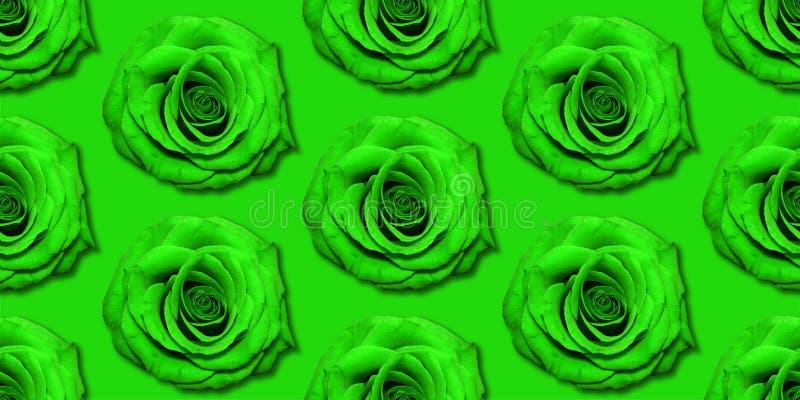 Взгляд сверху картины цветков Роза, плоское положение Цветочный узор на яркой предпосылке стоковые изображения rf