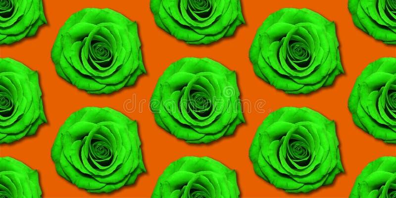Взгляд сверху картины цветков Роза, плоское положение Цветочный узор на яркой предпосылке стоковые фотографии rf