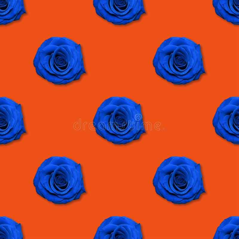 Взгляд сверху картины цветков Роза, плоское положение Цветочный узор на яркой красной предпосылке стоковое фото rf