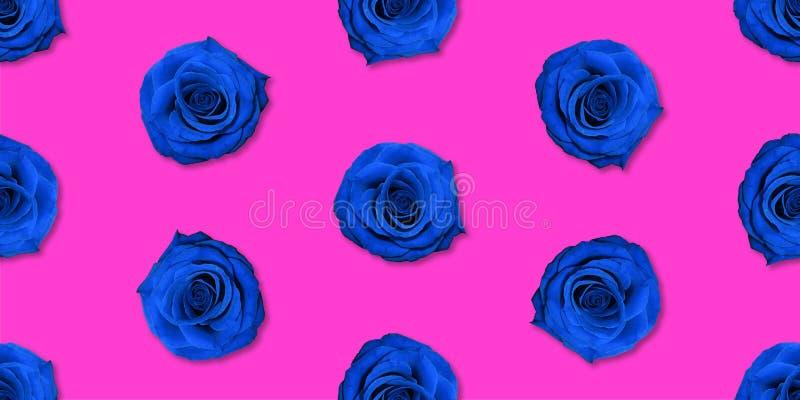Взгляд сверху картины цветков Роза, плоское положение Цветочный узор на яркой предпосылке стоковое фото rf