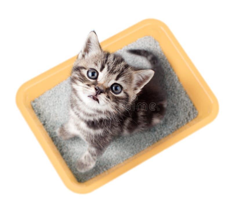 Взгляд сверху кота сидя в желтой изолированной коробке сора стоковые фотографии rf