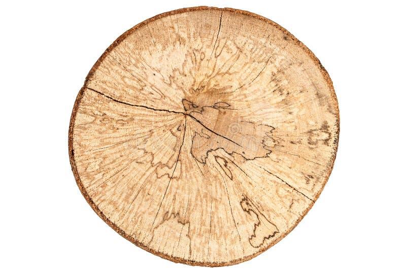 Взгляд сверху пня дерева бука изолированного на белой предпосылке стоковая фотография