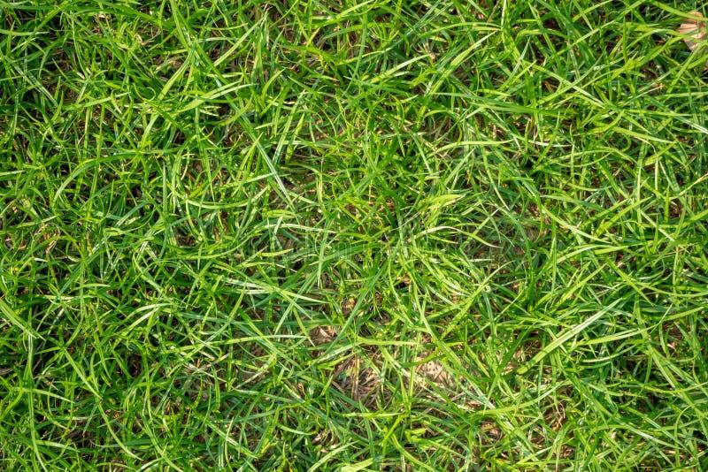 Взгляд сверху свежей зеленой травы с солнечным светом на парке земли п стоковое изображение rf