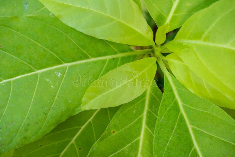 Взгляд сверху свежих зеленых листьев для предпосылки стоковое фото