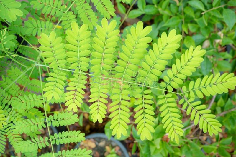 Взгляд сверху свежих зеленых leaaves на запачканной предпосылке стоковое фото