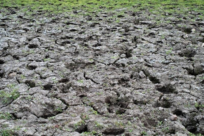 Взгляд сверху сухой треснутой почвы с травой стоковое изображение rf