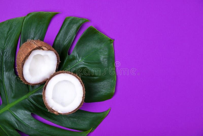 Взгляд сверху уменьшанного вдвое зрелого кокоса на лист тропического завода monstera на фиолетовой пурпурной предпосылке r стоковая фотография