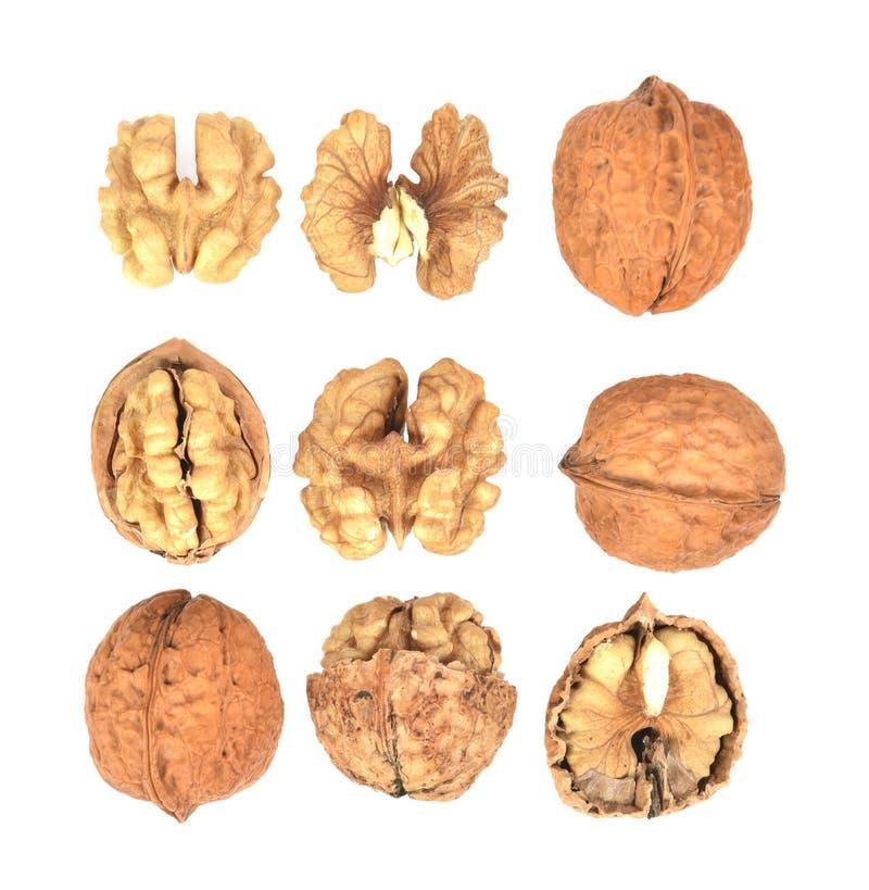 Взгляд сверху установил грецких орехов с изолированный на белой предпосылке стоковое фото rf