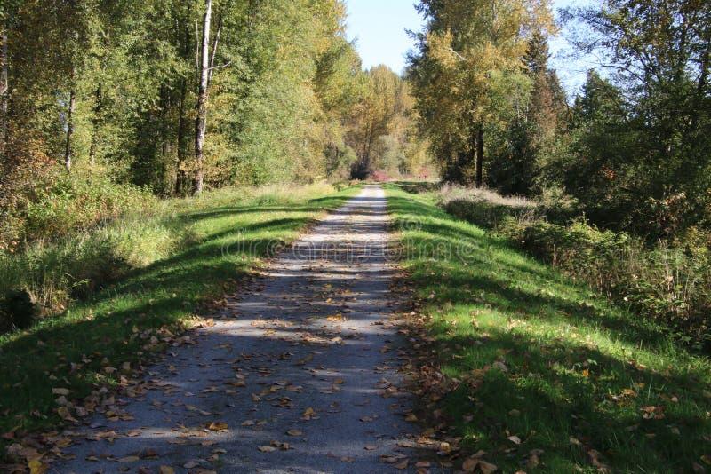 Взгляд следа с деревьями на левой стороне стоковые фотографии rf