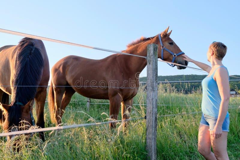 Взгляд со стороны женщины которое ласкает лошадей на поле фермы на заходе солнца стоковое фото