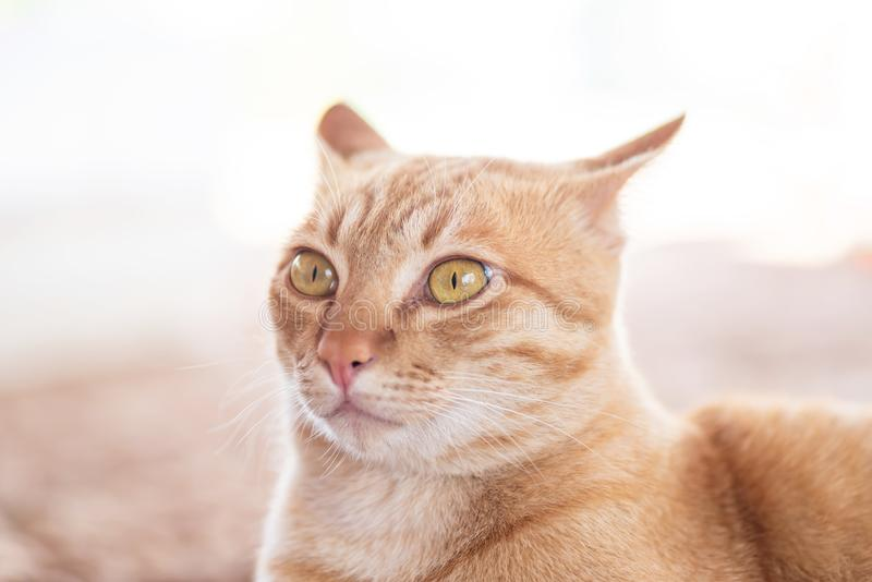 Взгляд со стороны кота имбиря стоковое фото