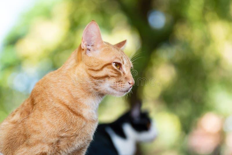 Взгляд со стороны кота имбиря стоковые фотографии rf