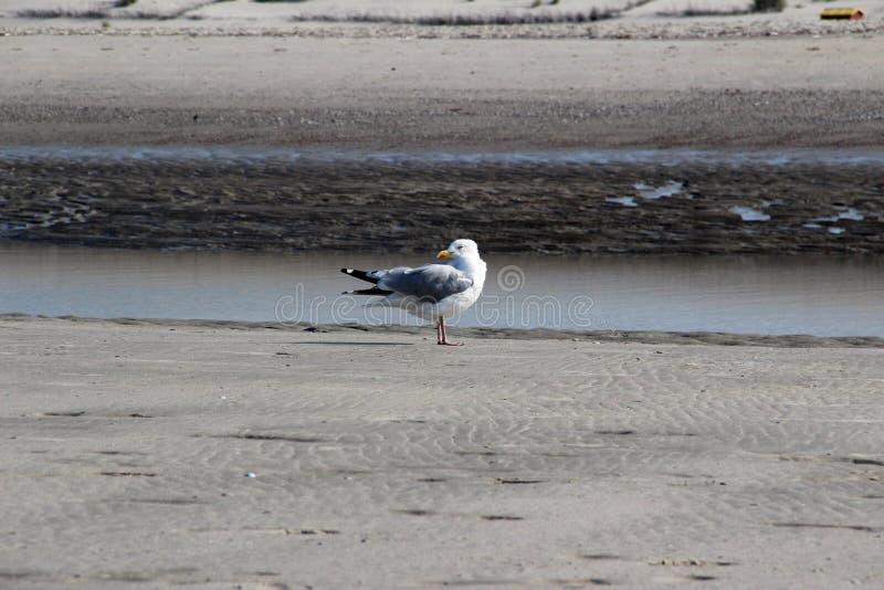 Взгляд со стороны на чайке на море под голубым небом на северном juist Германии острова моря стоковое фото