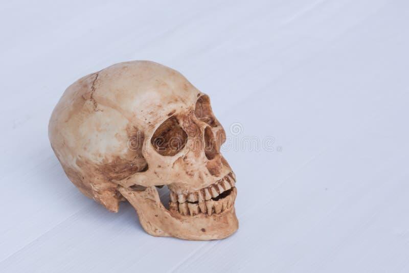 Взгляд со стороны человеческого черепа стоковое фото