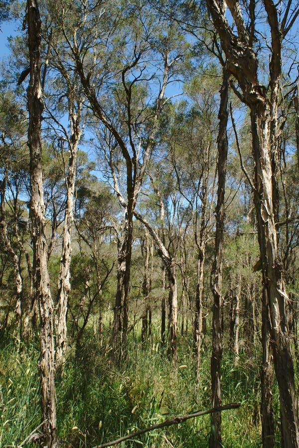 Взгляд среднего леса стоковые фотографии rf