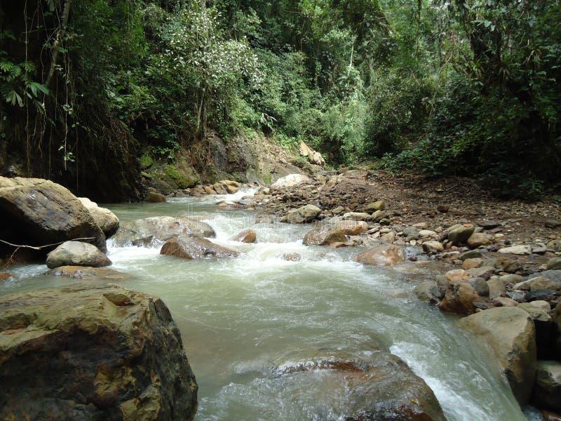 Взгляд течения реки в положении Barinas стоковые фото
