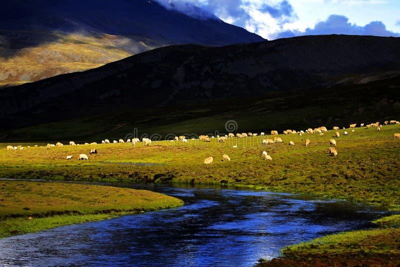 взгляд Тибета стоковая фотография