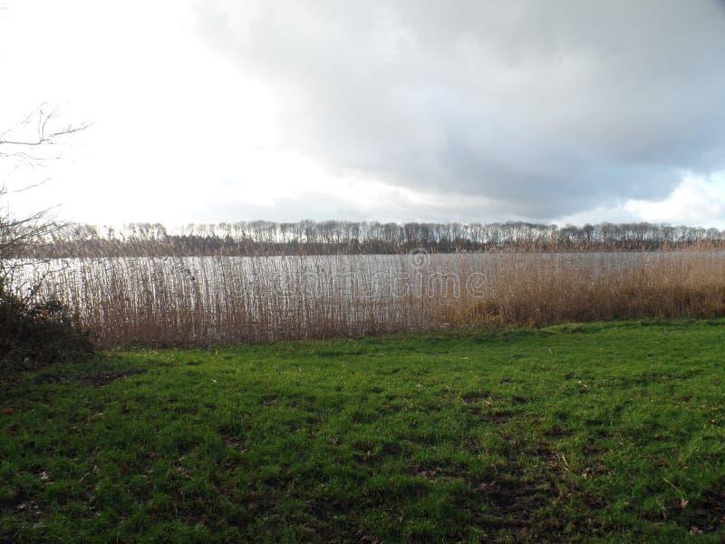 Взгляд тростников и озера в Maarssen, Нидерландах стоковое изображение