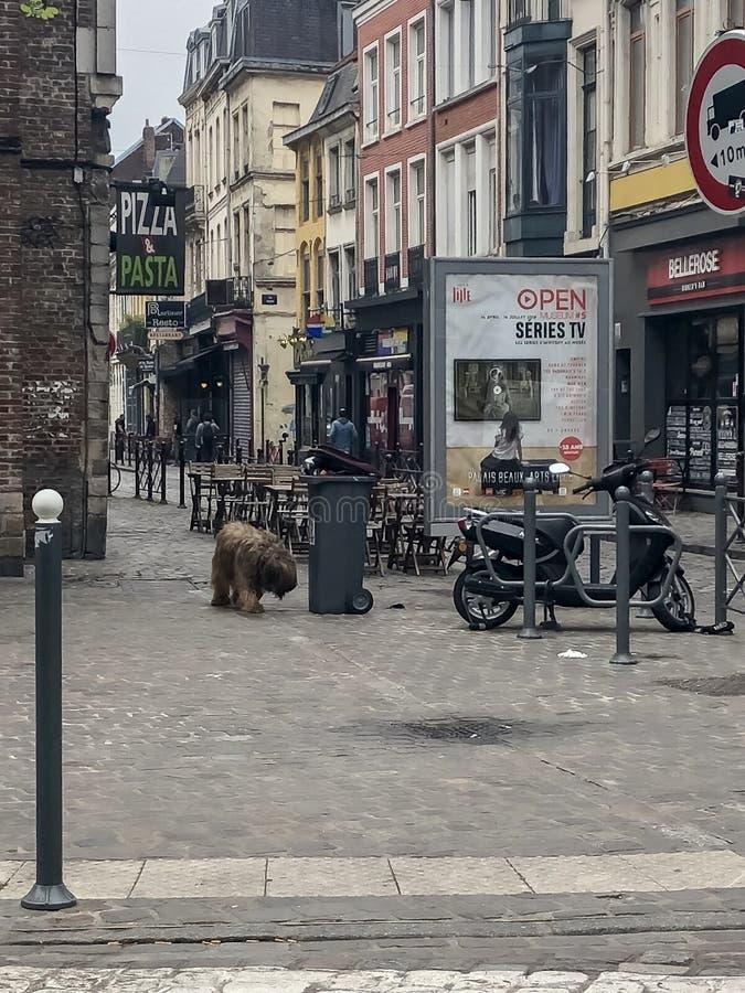 Взгляд улицы города с большой собакой в Европе стоковые изображения