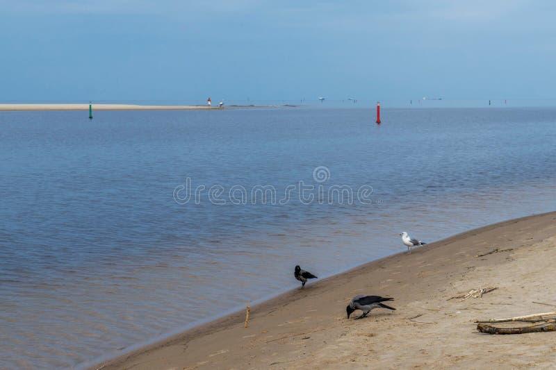 Взгляд утра моря в предыдущей осени стоковая фотография rf