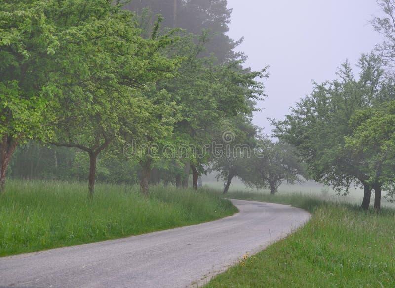Взгляд утра сельской местности в южной Богемии стоковая фотография rf