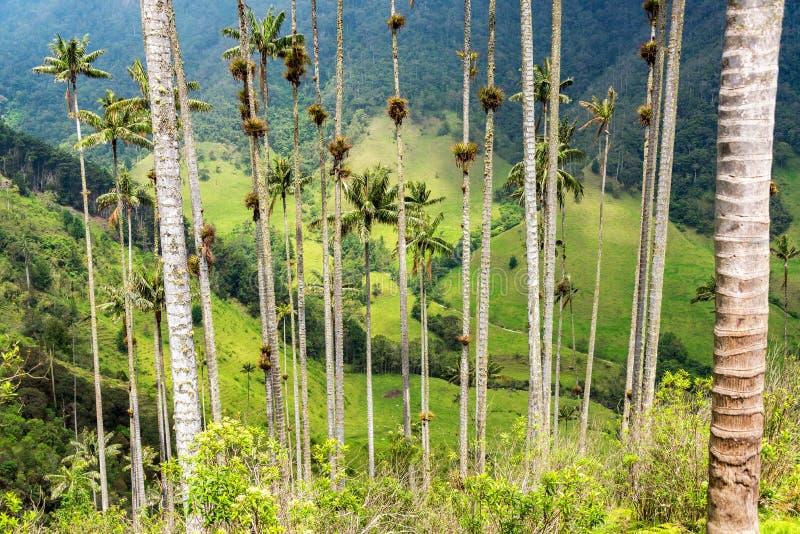 Взгляд через пальмы стоковые изображения