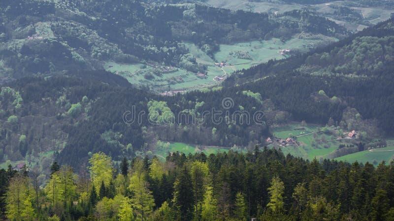 Взгляд черного леса и луга от горы к долине стоковые фотографии rf