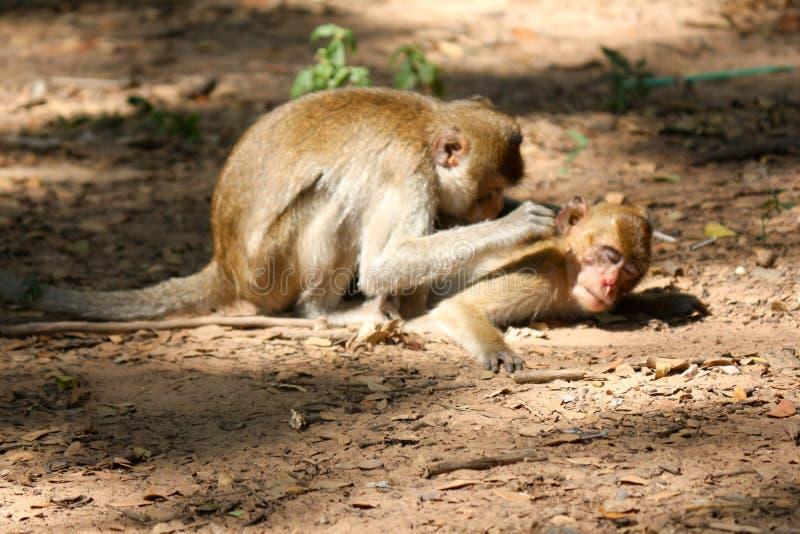Взгляд шарика обезьяны на том основании стоковые фотографии rf
