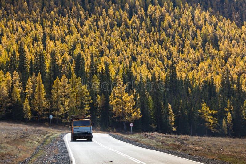 Взгляд шоссе Chuysky Trakt с тележкой и желтым лесом осени республики Altai стоковая фотография rf