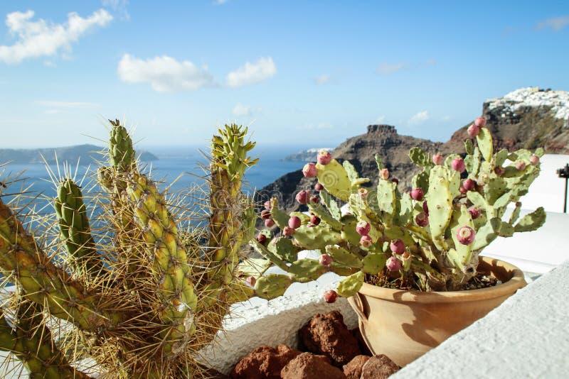 Взгляд Эгейского моря на острове Santorini с цветя кактусами стоковая фотография