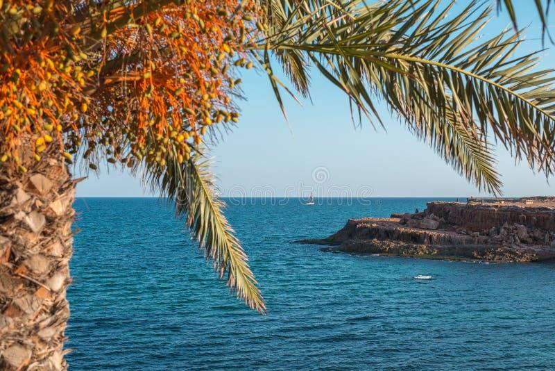 Взгляд яхты под пальмой стоковые изображения rf
