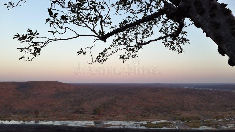 Взгляд bushveld в южно-африканском запасе игры в раннем вечере стоковое изображение rf