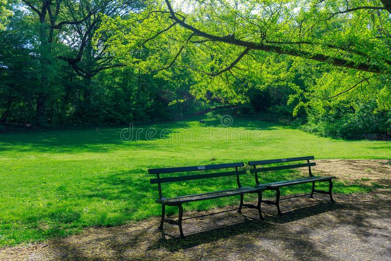 Взгляд Central Park в Нью-Йорке весной стоковые фотографии rf