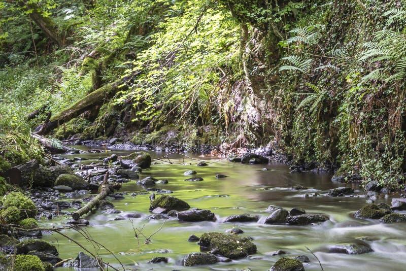 Взгляд Fairy водопадов Глена стоковая фотография
