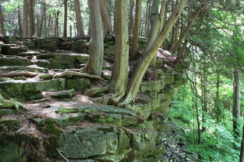 взгляд hiking тропки bruce стоковые фото