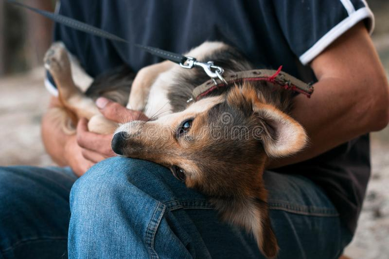 Взгляд Ropped человека sittting и держа коричневая собака стоковое изображение