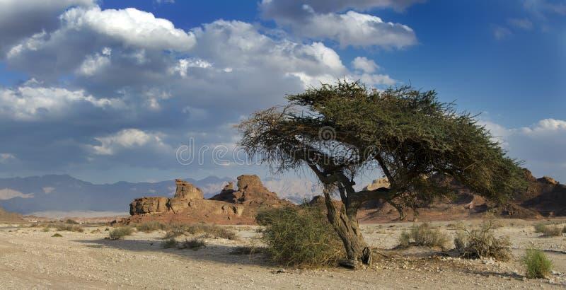взгляд timna rockies парка Израиля стоковые изображения