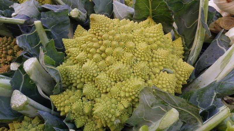 Взгляд Unic зеленого цвета Colliflower Romanesko vegetable стоковые фото