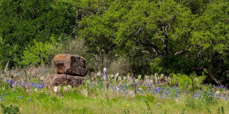 Взгляд wildflowers и утесов Техаса весной стоковые фотографии rf