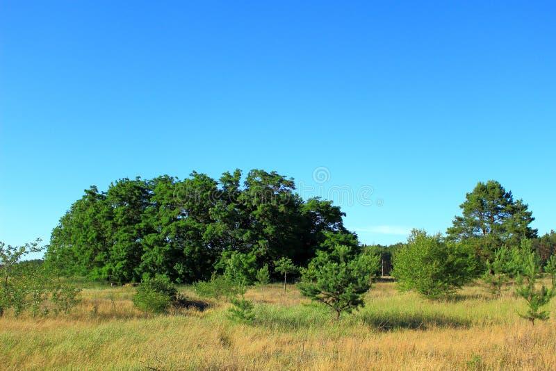 Взгляд ландшафта с деревьями и кустами стоковые фотографии rf